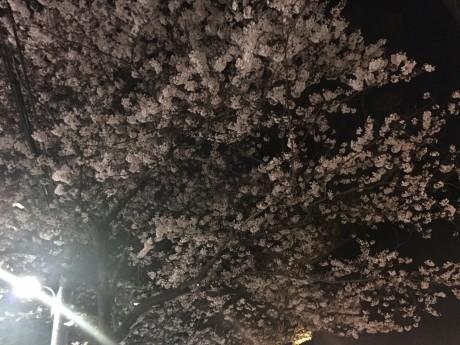 ヘアアレンジ講座&着物お花見食事会